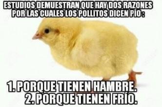 humor-adictamente-pollos.jpg